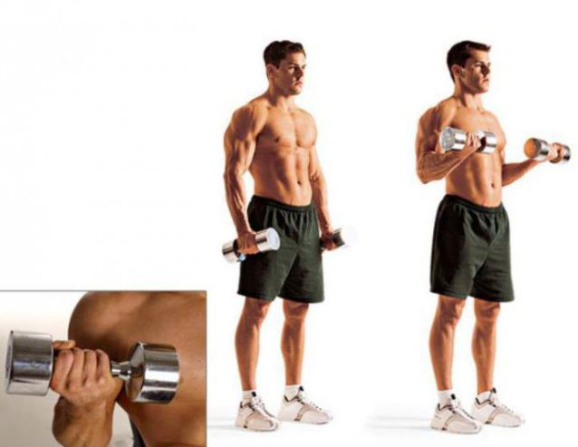 Thể dục tăng cân, bài tập cơ bắp cánh tay